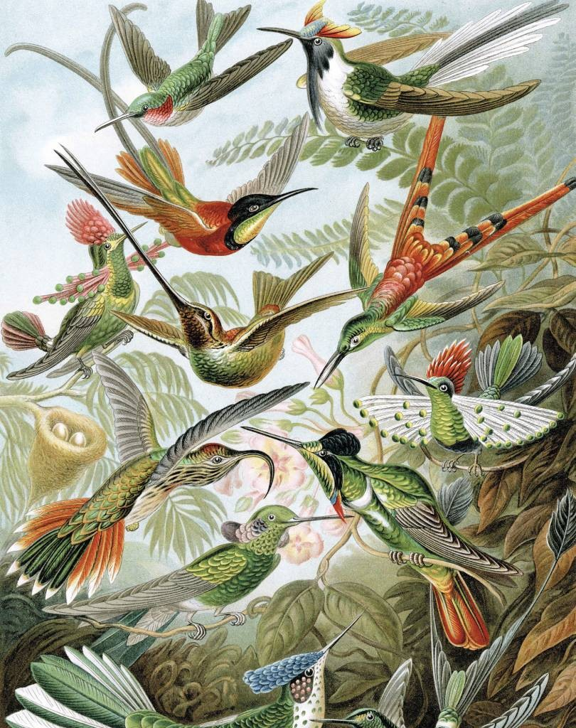 KEK Wallpaper Panel, Exotic Birds-8719743885721-30
