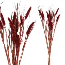 PTMD droogbloemen pink dwarf fountain grass-8720014323705-20