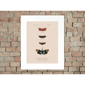 Naturalis Unlimited art print 30x40 in passe-partout 40x50 Insecten - IV